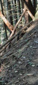 Innsbruck Trail 202029 - Kopie